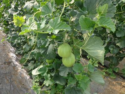 《吉林省梨树县梨喇棚膜蔬菜产业园区发展规划》通过初稿汇报