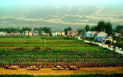 某县农业产业园区总体规划